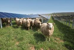 Conergy suministrará y planificará la construcción de dos parques solares de 2 MW para la compañía eléctrica alemana SWT StadtwerkeTrier
